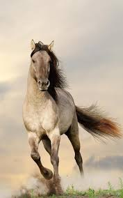 horses live wallpaper for android