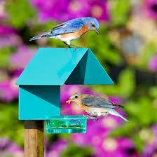 Fence Post Metal Glass House Bird Feeder Orange Post Mount Bird Feeders At Songbird Garden