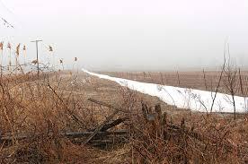 Spring Fog by © Brigitte Smith
