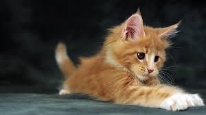 1600x900 القطط خلفية صور سطح المكتب 7241810