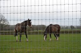 Horse Fence R12 110 8 And R13 120 8 Hartwells Fencing