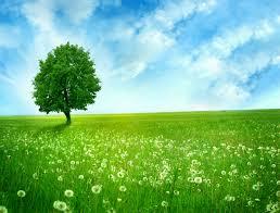 landscape nature trees fields 4k hd