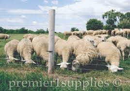Before You Buy Or Build A Fence Premier1supplies Sheep Guide