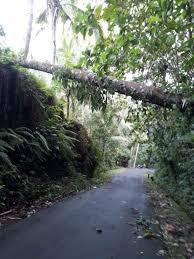 Angka Jitu Mimpi Melihat Pohon Kelapa Tumbang Pool303