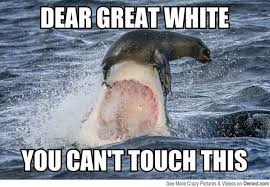 t touch this funny shark meme image