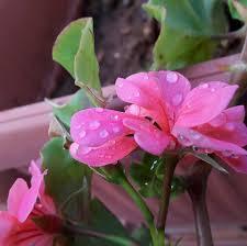 أجمل صور الورود Home Facebook