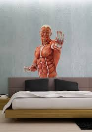 3d Anatomy Pose 8 People Vinyl Wall Decal Full Color Sticker Decor Removable Art Mural Www Uberdecals Ca B4 Vinyl Wall Decals Sticker Decor Coloring Stickers
