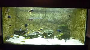 3d background to a fish tank aquarium