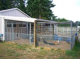 Safe Housing For Chickens
