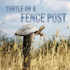 10 7 2020 Wed Turtle On A Fence Post By Word Of Life Apopka Free Listening On Soundcloud
