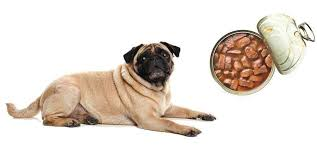 5 of the best wet dog food for pugs on