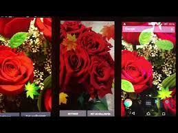 beautiful rose free live wallpaper