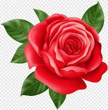 وردة حمراء التوضيح بيربل روز هوم الأزرق Floribunda Png