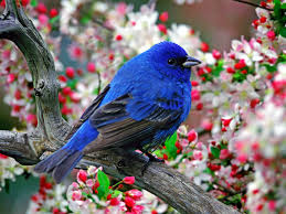 صور عصافير اجمل صور عصافير ملونه هل تعلم