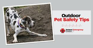 aspca guide to pet safe gardening