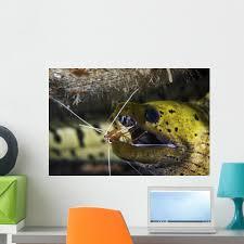 Yellow Spotted Eel Getting Wall Decal Wallmonkeys Com