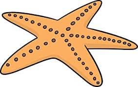 Amazon Com Cute Colorful Ocean Sea Starfish Cartoon Art Emoji Vinyl Sticker 8 Wide Yellow Spotted Automotive