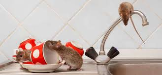 how to deter mice and rats from your