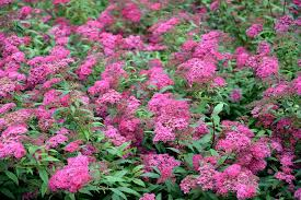 top 10 plants for clay soil the