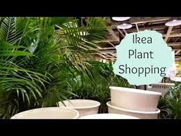 ikea plant ping with me