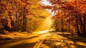 تحميل خلفيات الخريف 4k الطريق سقوط أوراق الشجر الغابات عريضة