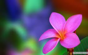best 37 flower backgrounds for laptop