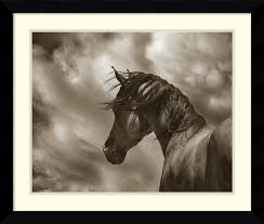 renegade horse by barry hart