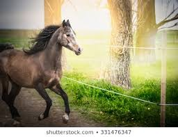 Horse Electric Fence Images Stock Photos Vectors Shutterstock