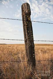 Barbed Wire Fencing And Wooden Post Photograph By Jetta Productions Inc