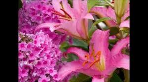 صور أجمل الورود في العالم ج1 Youtube
