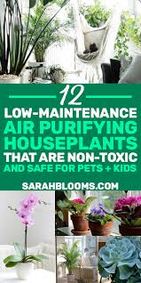 12 air purifying houseplants safe for