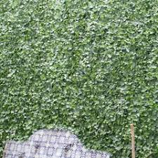 Ivy Fence Wayfair