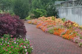 mive bloom of various flowers in
