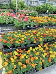tropical gardening if coronavirus has