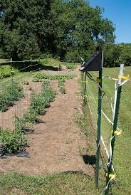 electric fenced vegetable garden