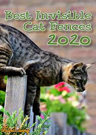 Best Invisible Fence For Cats Reviewed Buyer S Guide 2020