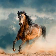 horse wallpapers backgrounds for ios