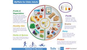 food pyramid for older s