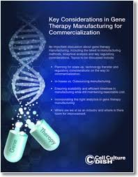 Key Considerations in Gene Therapy Manufacturing for Commercialization -  Cell Culture Dish