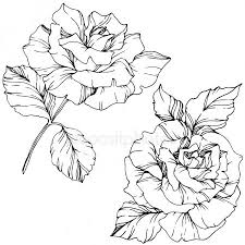 ᐈ flower stock drawings royalty free