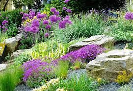 plants for rock gardens