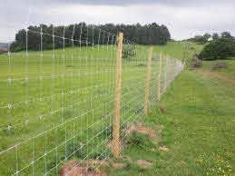 The Different Types Of Deer Fencing Benner S Gardens