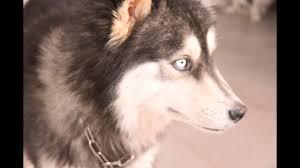 إعلم المزيد عن كلاب الروت وايلر Www Dogsfast Com
