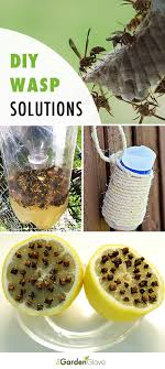 diy wasp traps solutions for the