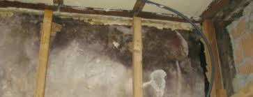 how to deal with mold in walls the