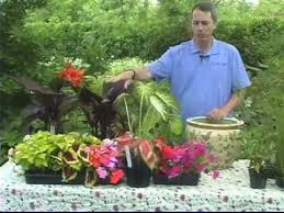 creating water gardens in containers