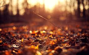 hipster autumn wallpapers top free