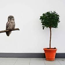 Amazon Com Great Gray Owl Wall Decal 18 Tall X 17 Wide Handmade