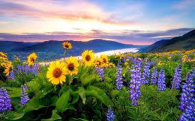 spring flowers mountain lake hills
