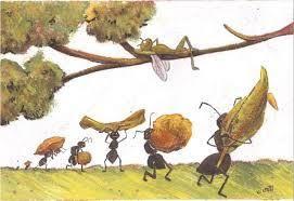 Risultato immagini per cicale formiche
